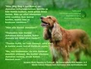 iso koira tietaa kaiken elainkommunikointi